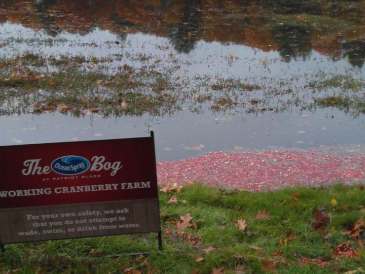 the nature trail and cranberry bog 12