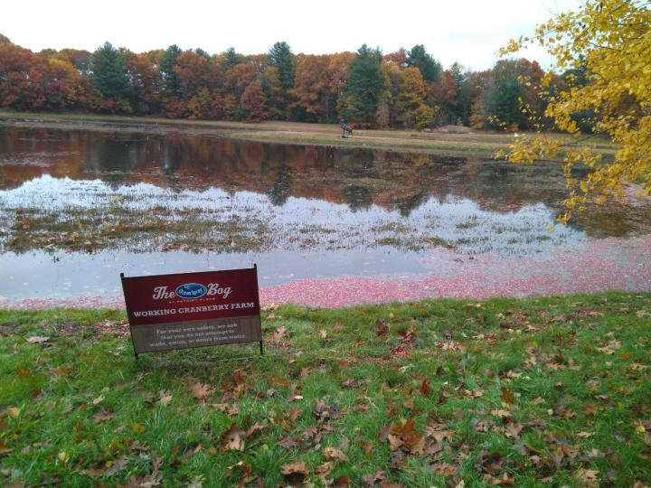 the nature trail and cranberry bog 13
