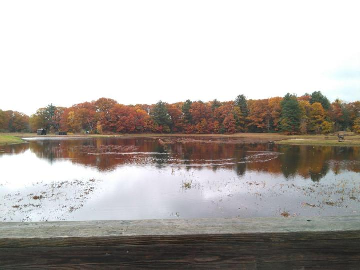 the nature trail and cranberry bog 14