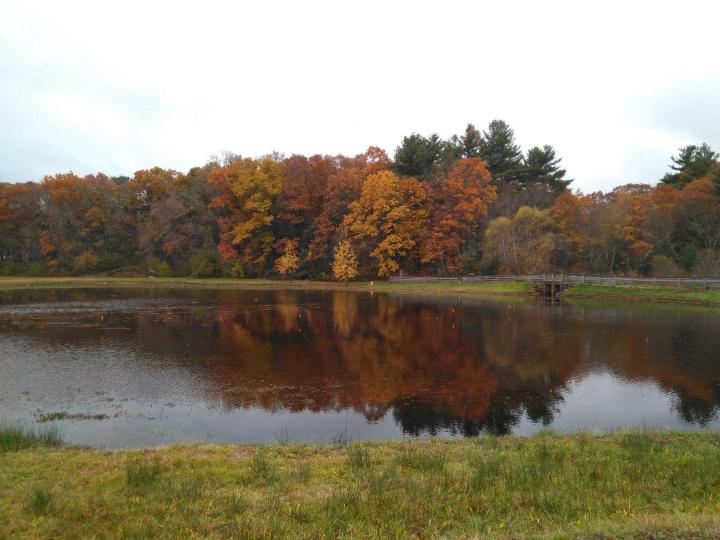 the nature trail and cranberry bog 17