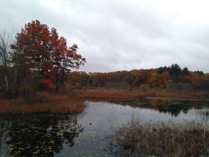 the nature trail and cranberry bog 19