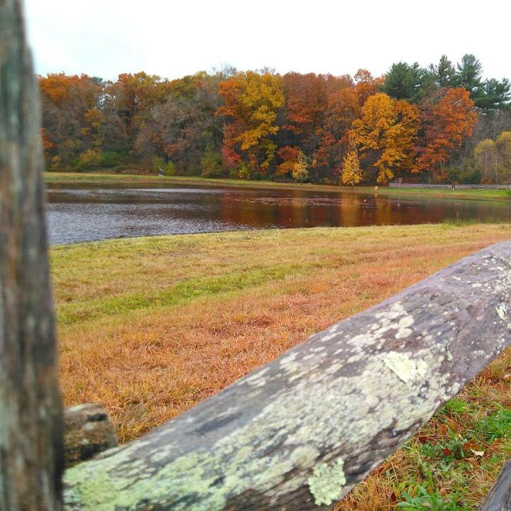 the nature trail and cranberry bog 2