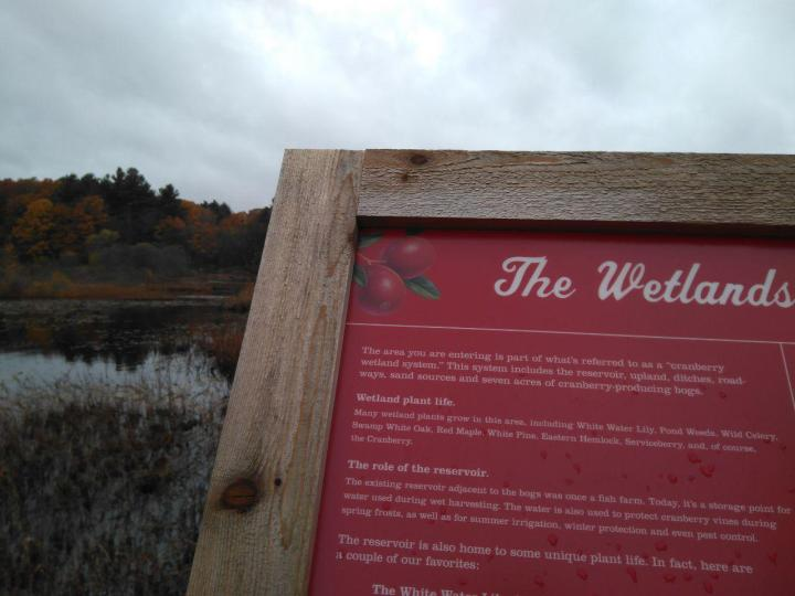 the nature trail and cranberry bog 20