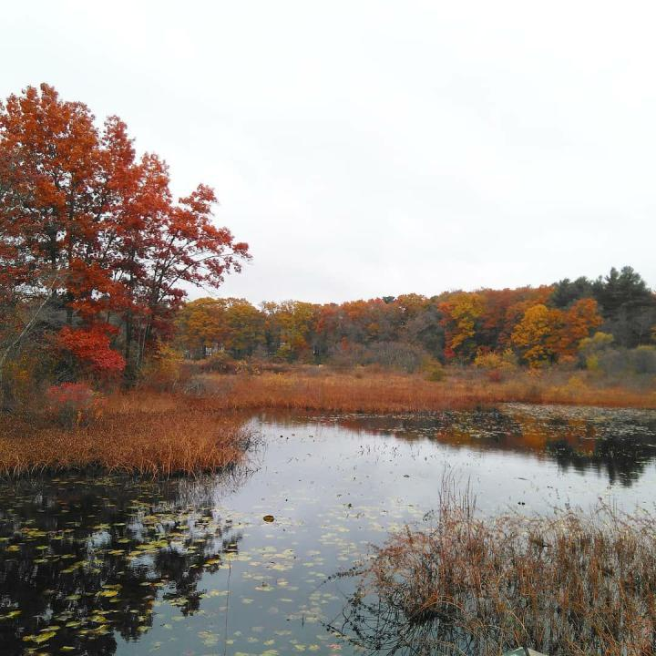 the nature trail and cranberry bog 3