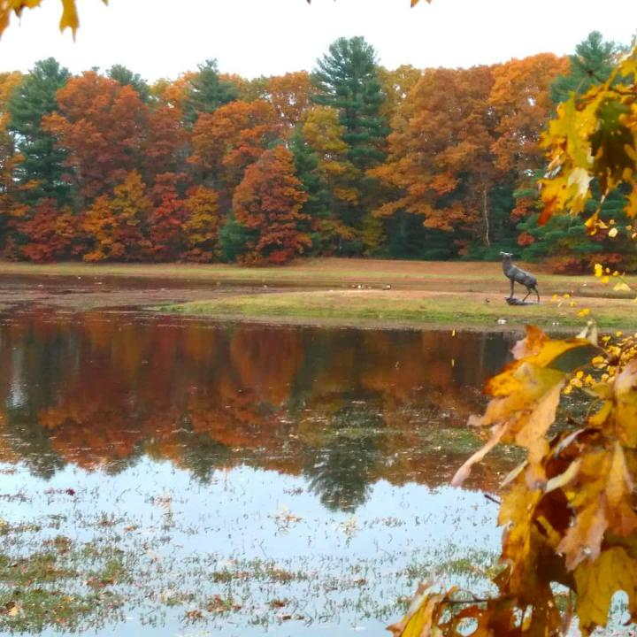 the nature trail and cranberry bog 4